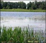 Через 100 лет Днепр станет болотом