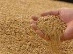 Олександр Вілкул привітав аграріїв Дніпропетровщини зі збором другого мільйона тонн зерна