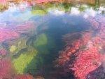 Cano Cristales – Кристальная река или Река пяти цветов