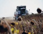 На Дніпропетровщині завершується збір соняшника і кукурудзи